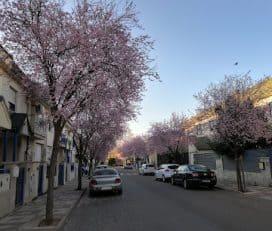 Parque del Pilar