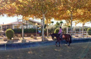 Hípica Champion Horse